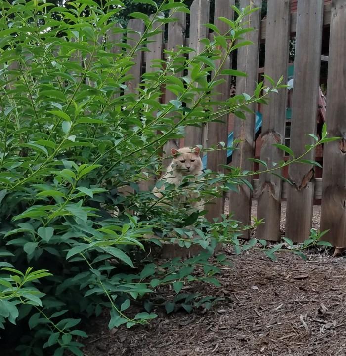 Cat Image Four