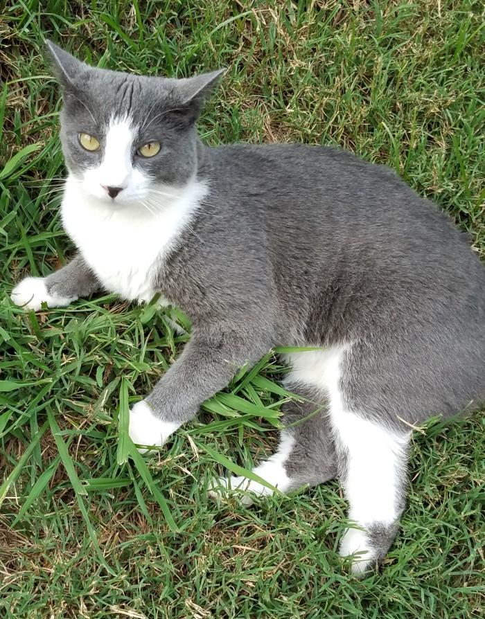 Cat Image Three