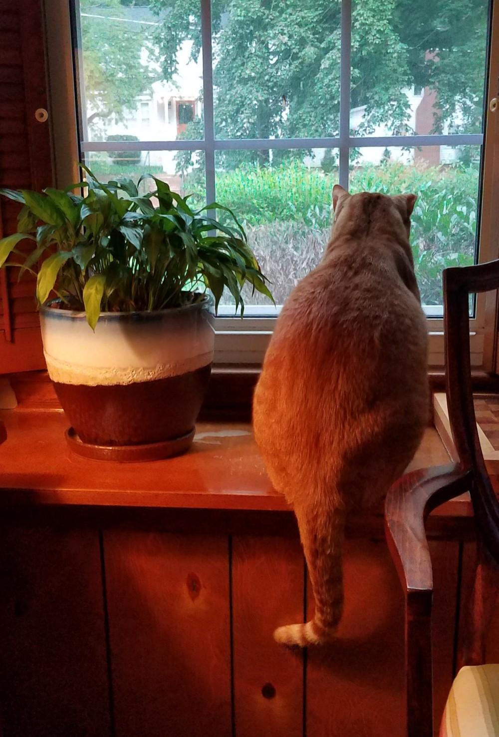 Cat Image Five