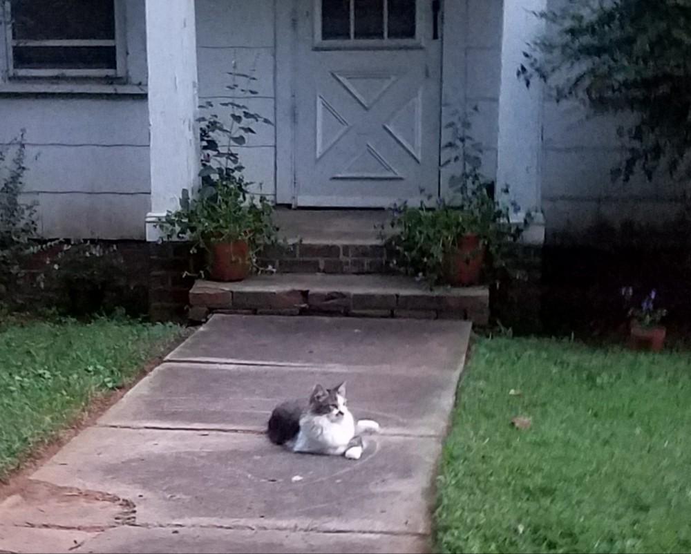 Cat Image One