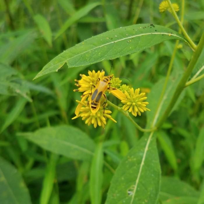 Flowers & Bug Image