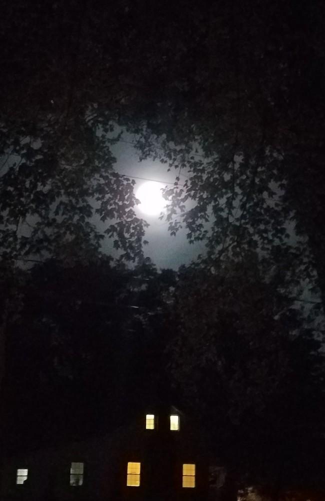 Hunter Moon Image Four
