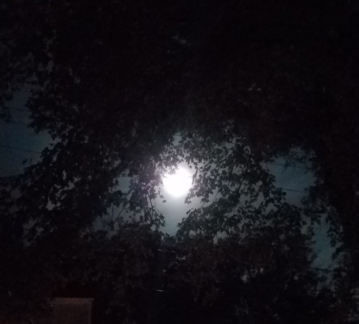 Hunter Moon Image Three