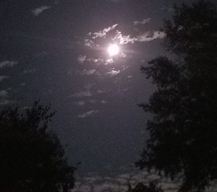 Beaver Moon Image One