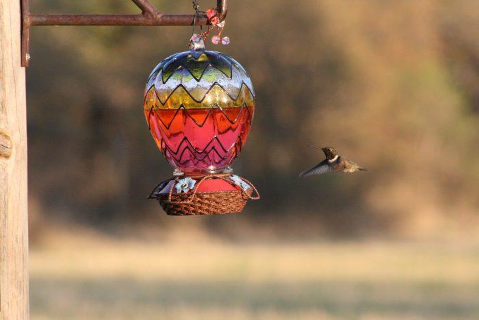 Hummingbird Image Seven