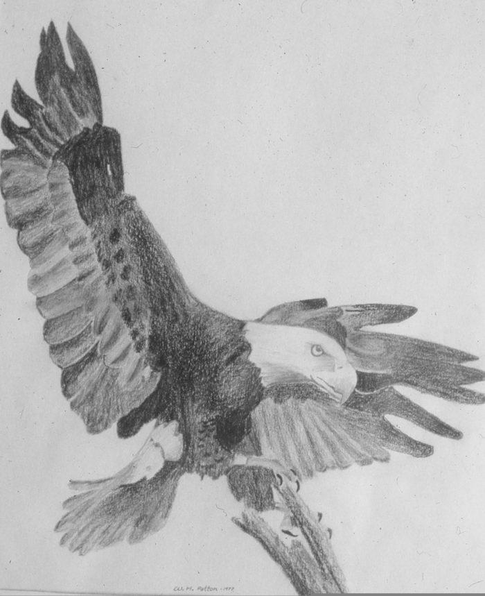 Eagle Image Nine