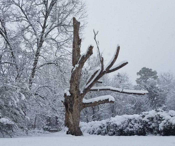 Lonely Tree Image Nine