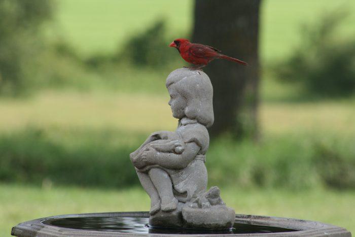 Cardinal Image Eight