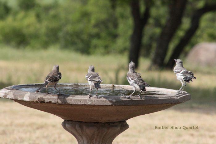 Mockingbirds Image Six