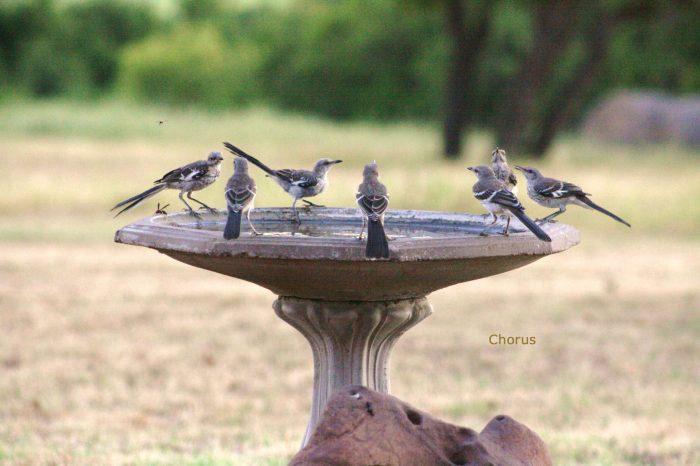Mockingbirds Image Seven