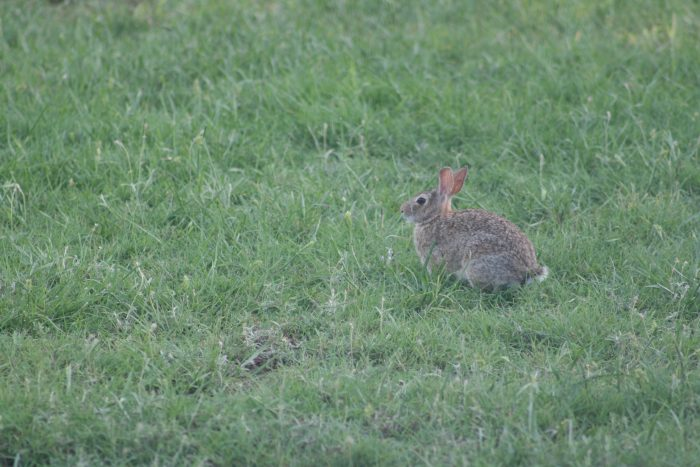 Rabbit Image Nine