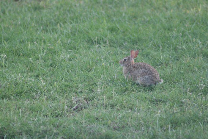 Rabbit Image Nine