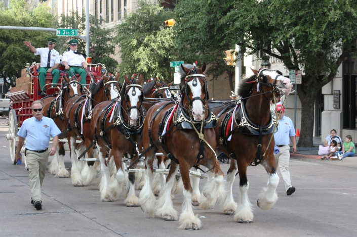 Clydesdales Photo Nine