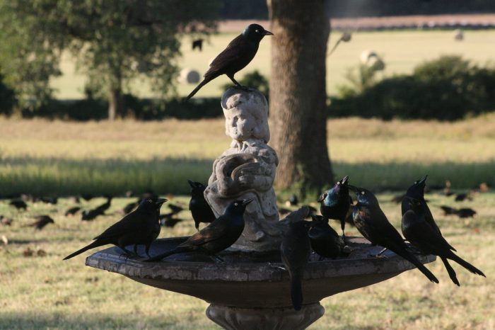 Starlings Photo Three