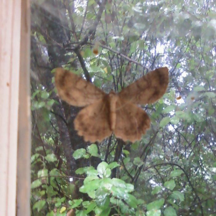 Moth In Window Image Eight