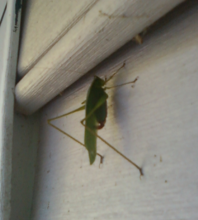 Grasshopper Image Two
