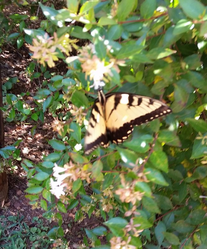 Butterfly Image Three
