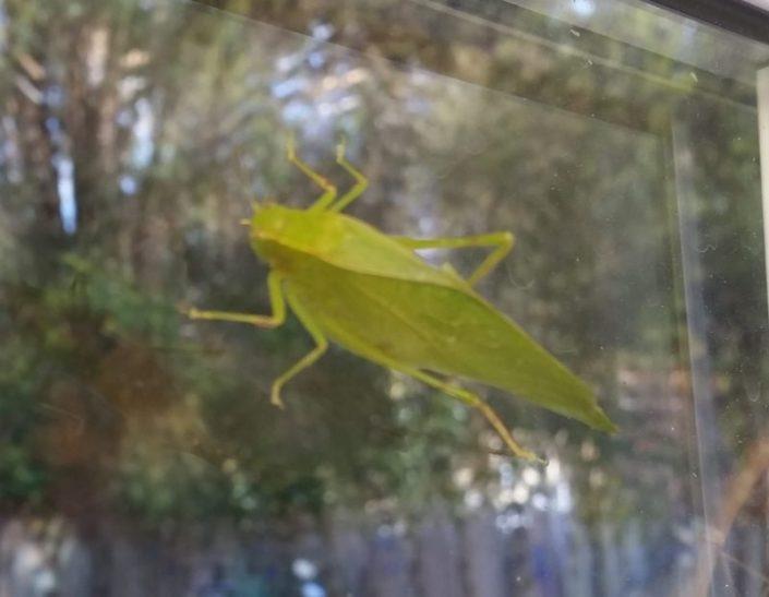 Leaf Grasshopper Image Seven