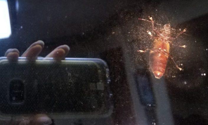 Roach Image Eight