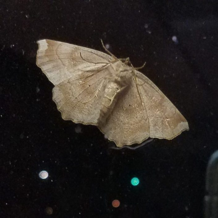 Moth Image Eight