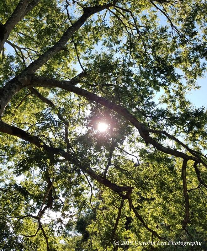 Solstice Sun Image