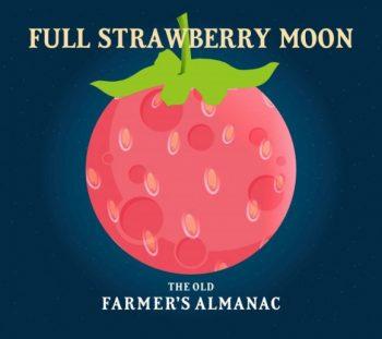 Farmers Almanac Strawberry Image Two