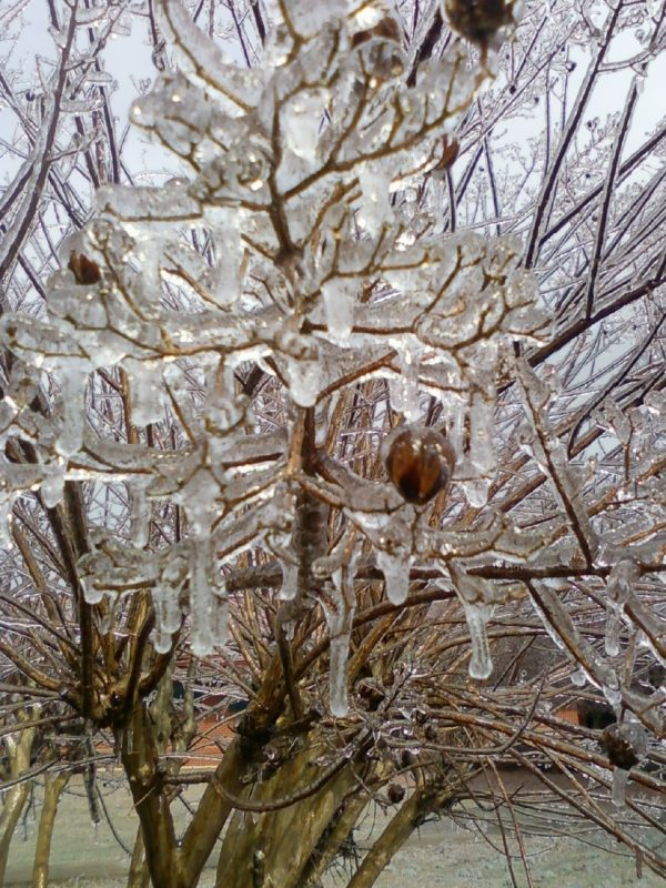 Ice Branches Image One