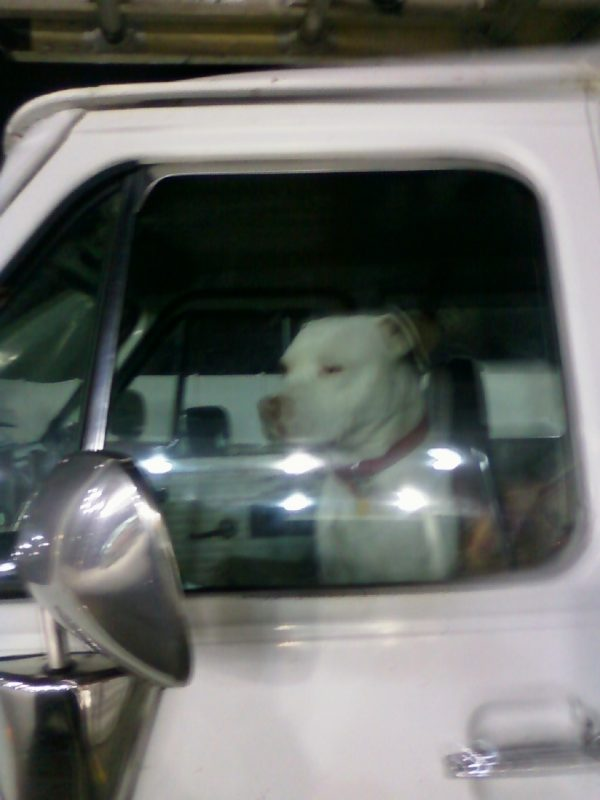 Dog In Truck Image