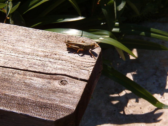 Grasshopper Image One