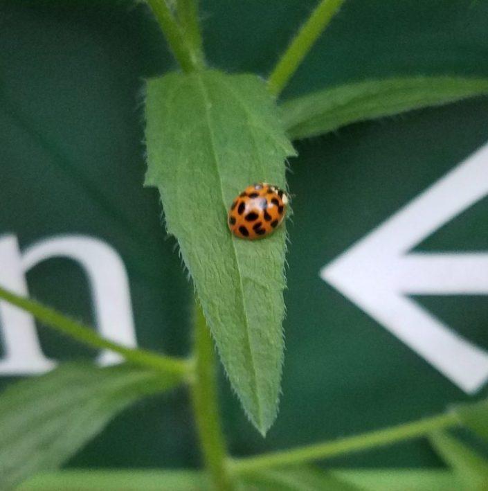 Ladybug Image Four