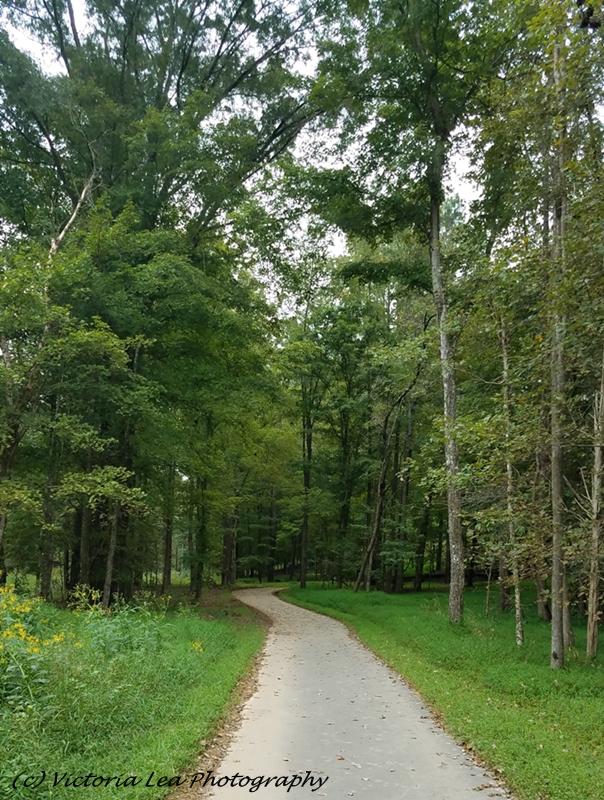 Riverwalk Path Image Two