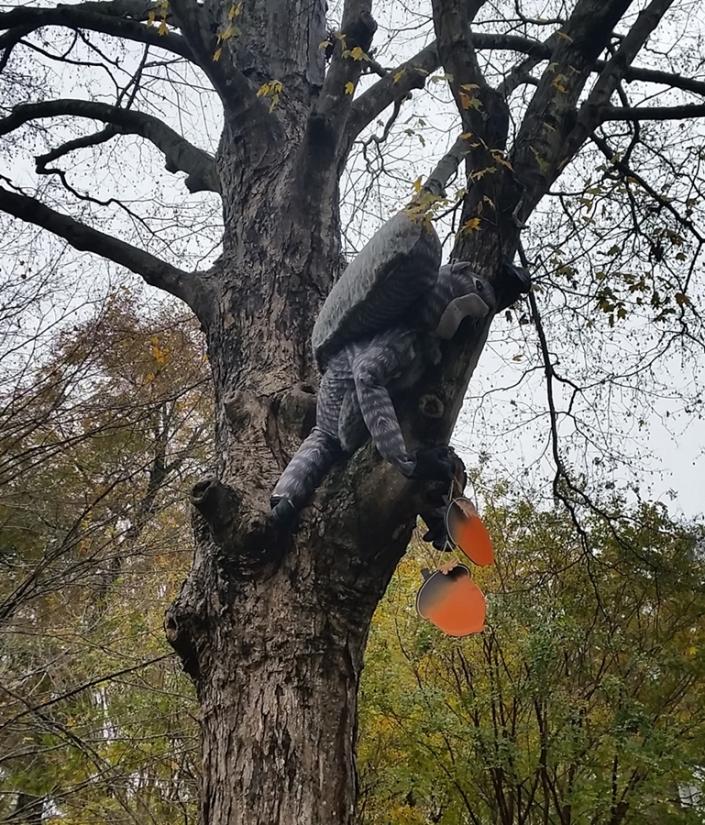 Squirrel Image One