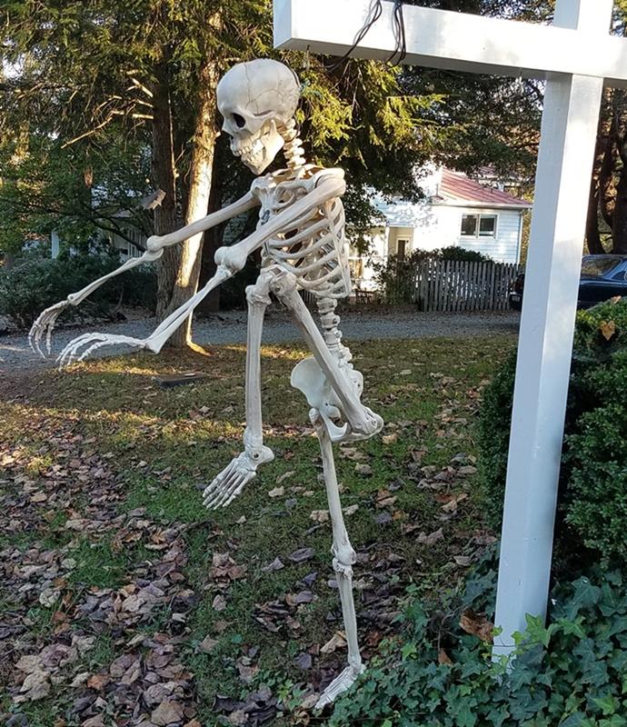 Skeleton Image Three