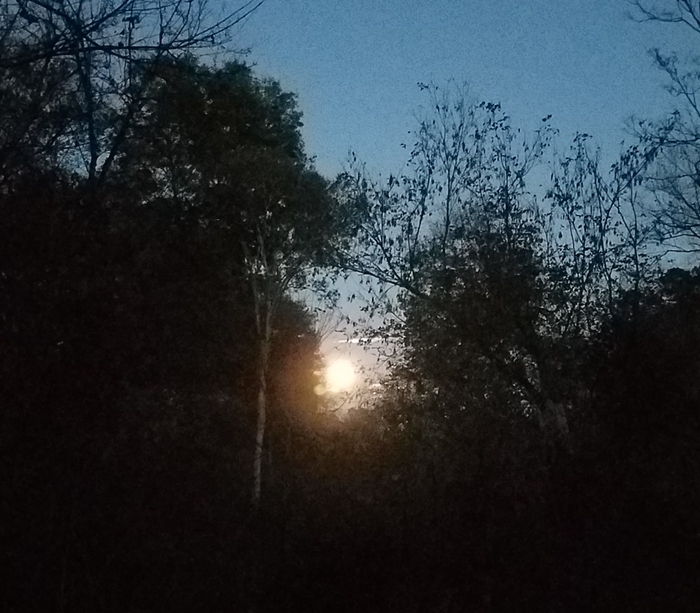 Beaver Moon 2019 Image Two