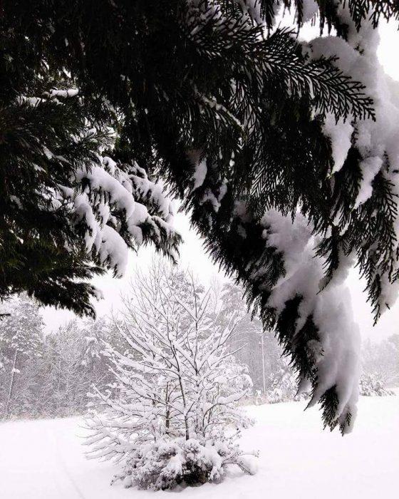 Snowy Limbs Image One