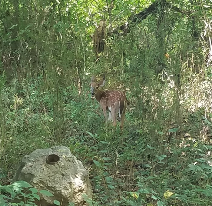 Fawn Image Six