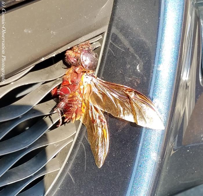 Big Dead Bug Image