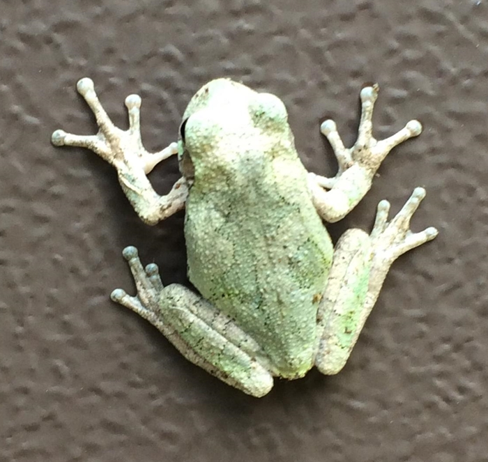 Tree Frog Image One