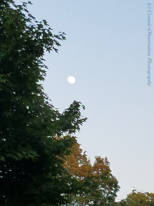 Gibbous Moon Trees Image Three