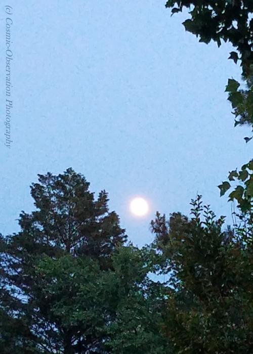 Gibbous Moon Trees Image Four