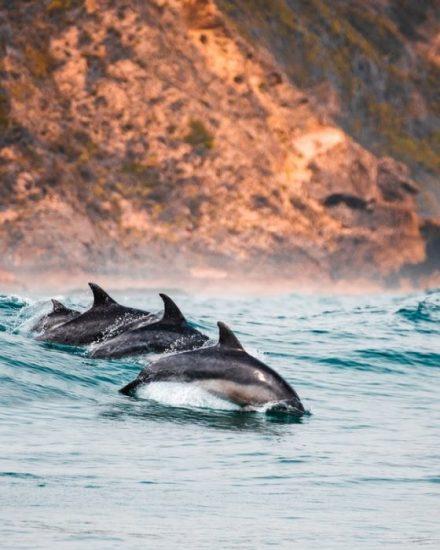 Dolphins Unsplash Image Two