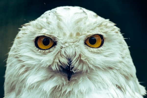 Hedwig Frida Bredesen Unsplash Image One