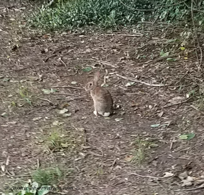 Bunny Image Two