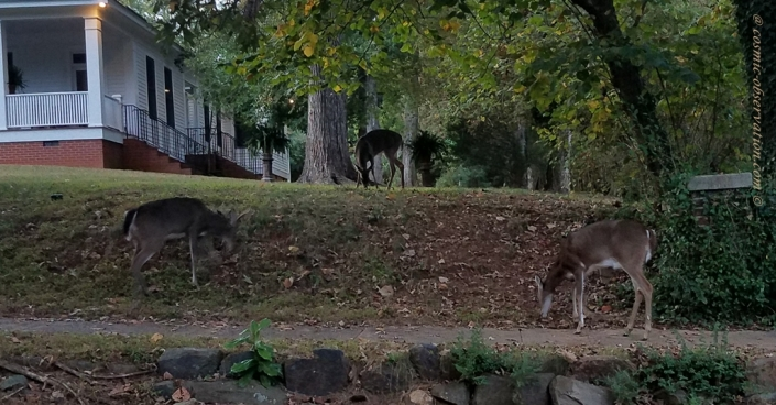 Deer Group Image Five