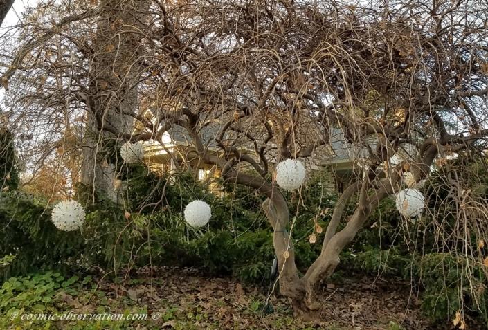 Bush Ornaments Image Five