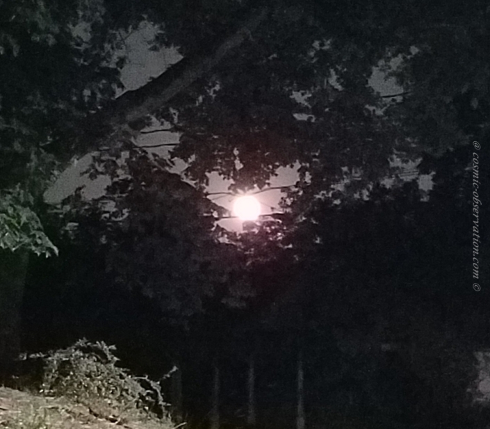 Flower Moon 2021 Image One