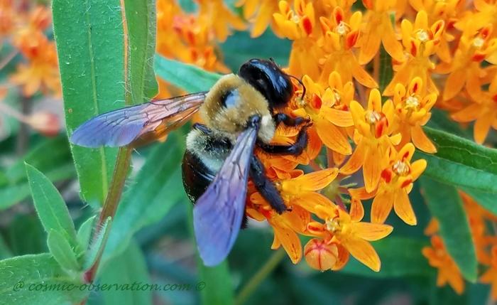 Bumblebee Image One