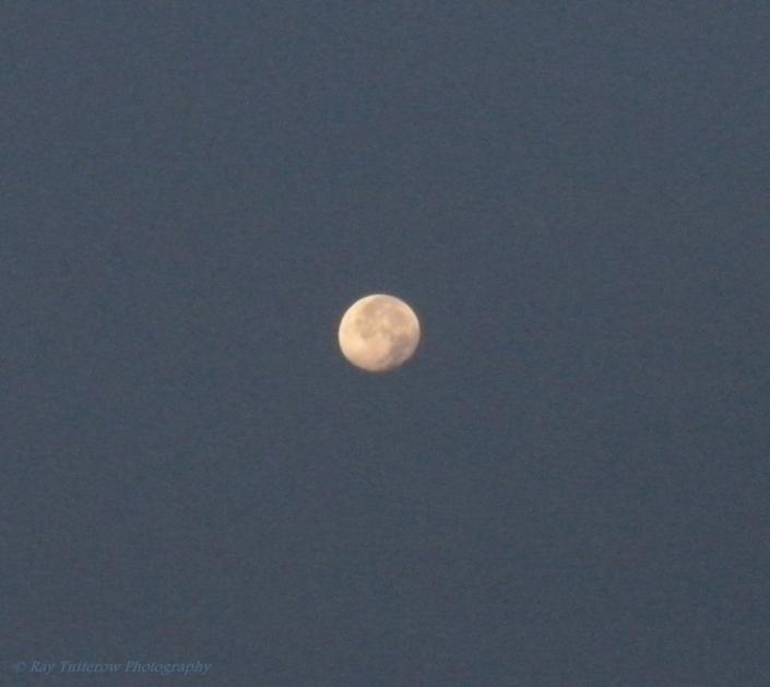 Sturgeon Moon August 2009