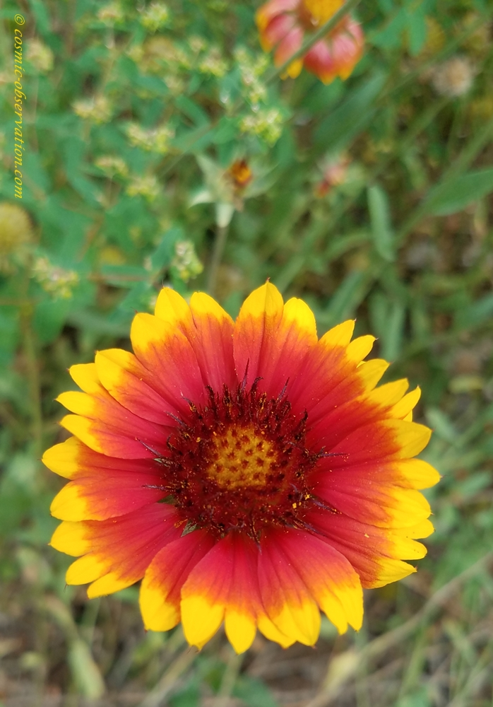 Arizona Sun Image